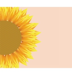 Sun flower with pattern vector image