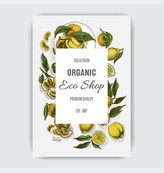 colorful citrus card illustration vector image