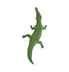 Crocodile amphibian animal view from above vector