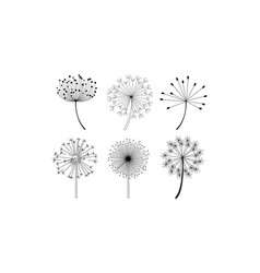set of dandelion flowers with fluffy seeds vector image
