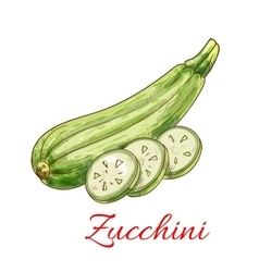 Zucchini squash vegetable isolated sketch vector