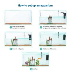 Aquarium setup realistic infographics vector