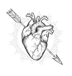 Human heart pierced with cherubs arrow hand drawn vector