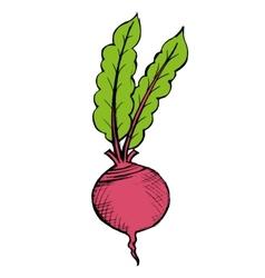 Red beet vector