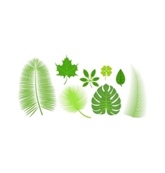 Leave icon vector image