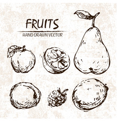 digital detailed fruit hand drawn vector image vector image