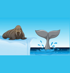 A walrus on ice floe vector