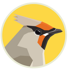 Bohemian waxwing birds collection vector