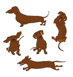 Collection dachshund dog icons vector