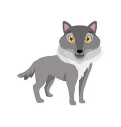 Cute grey wolf lovely animal cartoon character vector