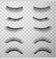 false eyelashes set make-up fashion and glamour vector image