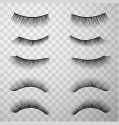 False eyelashes set make-up fashion and glamour vector