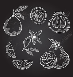 Hand drawn pomelo fruits vector