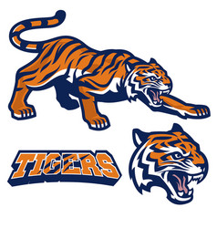 Mascot tiger crouching in set vector