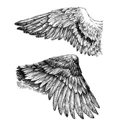 Wings drawing vector