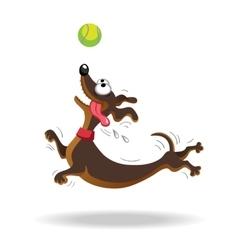 Dachshund dog playing with tennis ball vector image