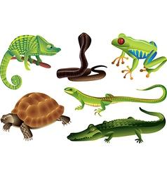 reptiles amphibia vector image vector image