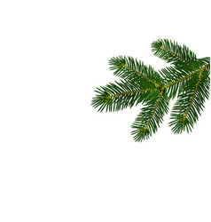 a green realistic lush branch of fir or pine vector image
