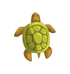 sea turtle reptile view from above cartoon vector image