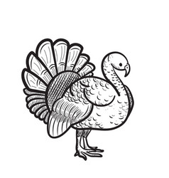 Thanksgiving day turkey hand drawn sketch icon vector
