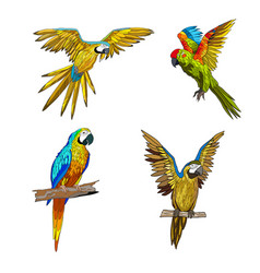 color seth from parrots in vector image vector image