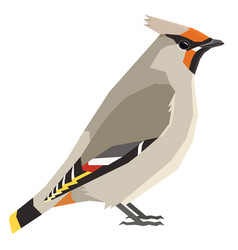 Bohemian waxwing bird isolated object vector