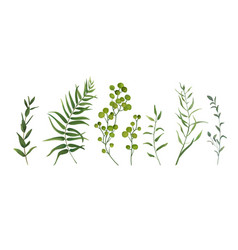 Designer elements set of green forest plants herb vector