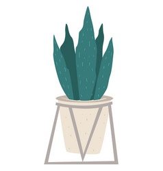 houseplant in modern pot office or home decor vector image