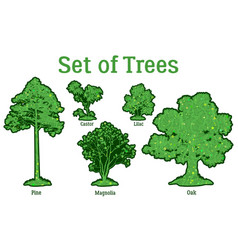 Set plants trees and bushes vector