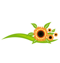sunflowers icon decoration design vector image