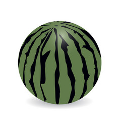 watermelon with shadow vector image