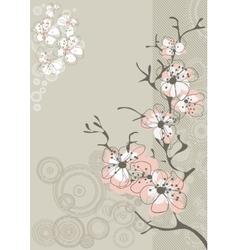 sakura blossom on gray background vector image