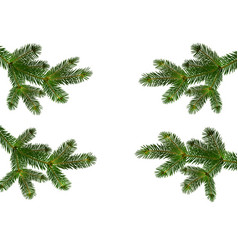 four green realistic branches of fir or pine close vector image