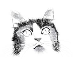 Head of a cat vector