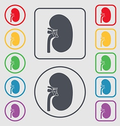 Kidney icon sign symbol on the Round and square vector image