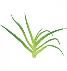 Aloe Vera leaves vector