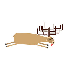 Dead moose deer is dead corpse of wild beast vector