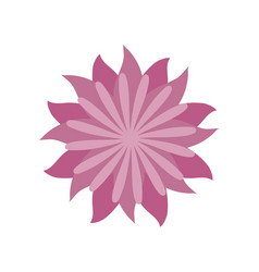Flower aster decoration image vector