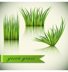 Fragments of the green grass vector