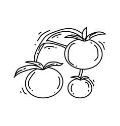 gardening tomato icon hand drawn icon outline vector image