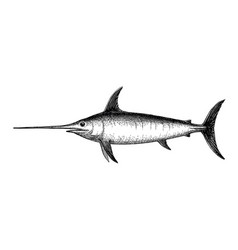 ink sketch of swordfish vector image