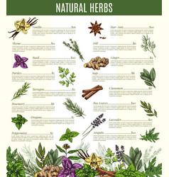 Menu of spices and herbs seasonings sketch vector