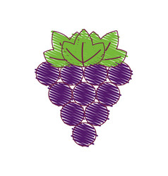 Purple grapes fruit icon image vector