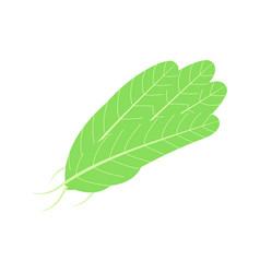 Salad ingredients set of leafy vegetable flat vector