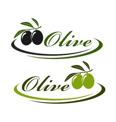 sign with olives vector image