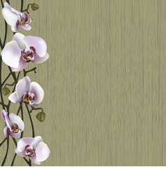 Green background with white orchid flowers vector image vector image