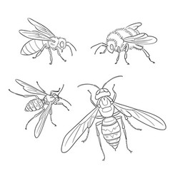 Bee wasp bumblebee hornet in outlines vector