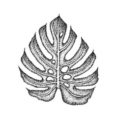 Dotwork monstera leaf vector