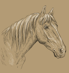Horse portrait-17 on brown background vector