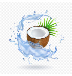 Pieces of fresh coconut with leaves water splash vector